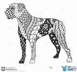 Boxer Dog Zentangle Coloring Stylized Illustratie Cane Zen Chien Hond Libera Drawn Pugile Stilizzato Uit Ha Lo Illustrazione Mano Vrije sketch template