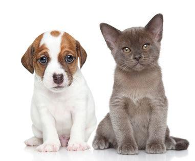 chambre d agriculture vend馥 les conditions de vente des animaux domestiques conseils santé