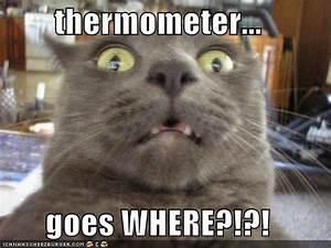 Pic Funny Pictures (# Funny cat picture .funny cat image)