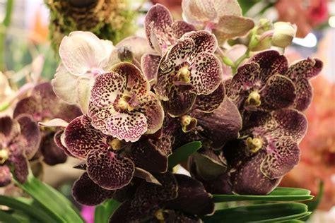 kaffeesatz als dünger für orchideen orchideen d 252 ngen die besten hausmittel und orchideend 252 nger