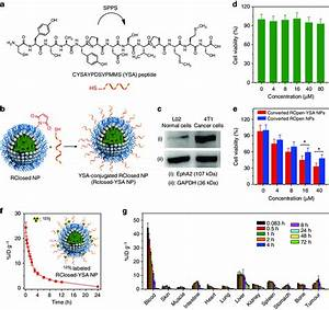Targeting Modification  Cytotoxicity And In Vivo