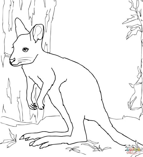 Wallabies Scene Colouring Page