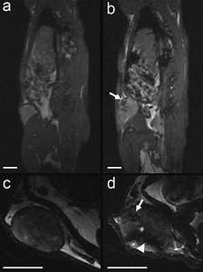 Examples Of Morphological Mri For Whole