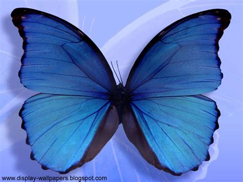 Animated Butterfly Wallpaper Moving - animated butterfly wallpaper moving