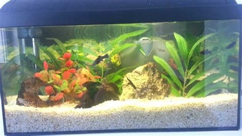 aquarium aquatlantis 60 litres mein 60 liter aquarium