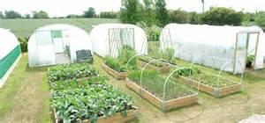 Layout Vegetable Garden