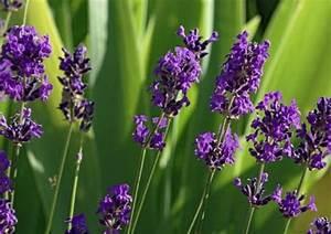 Kakerlaken Im Garten : weniger insekten im garten durch die richtigen kraeuter haushalt berichte ~ Whattoseeinmadrid.com Haus und Dekorationen