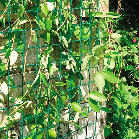 Climbing Plant Support Mesh  50mm X 50mm  05m Or 1m Wide
