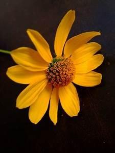 Wie Oft Blumen Gießen : wie hei t diese gelbe blume pflanzenbestimmung pflanzensuche green24 hilfe pflege bilder ~ Orissabook.com Haus und Dekorationen