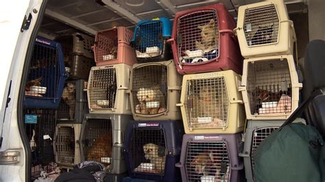1910 chestnut place denver , co 80202. Bill Aiming To Tighten Regulations On Pet Stores, Breeders ...