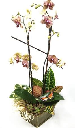 what to do when your orchid flowers fall top 28 what to do when your orchid flowers fall morningside florist flower shop in rancho