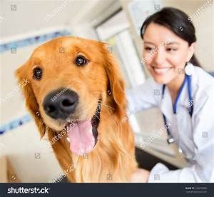 Cute Dog Vet Getting Checkup Stock Photo 133079585 ...