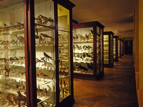file mus 233 e zoologique de strasbourg ornithologie 2 jpg wikimedia commons