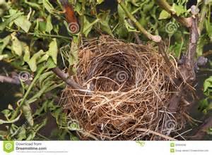 Empty Bird Nest in Tree
