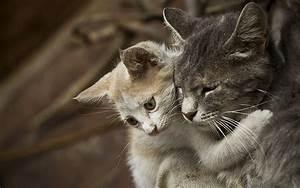 Cute animals sh... Cute Animals