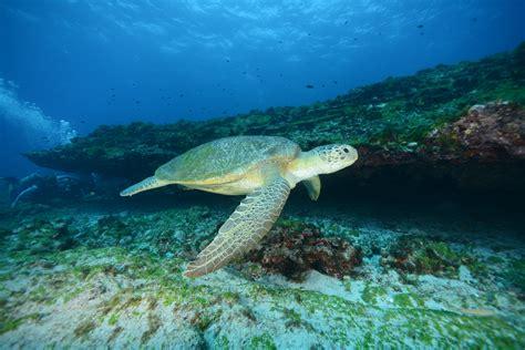 chambre privatif ile de voyage à fernando de noronha l 39 archipel paradisiaque du