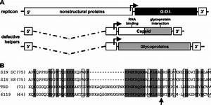 Sinrep  Veeenv Replicon Particle Chimeras   A  Schematic