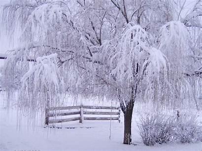 Winter Desktop Backgrounds Background Downloads