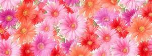 Free Code Projects: Flowers Facebook Timeline Cover Photo ...