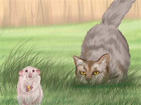 How To Make Your Cat Happy 10 Steps (with Pictures) Wikihow
