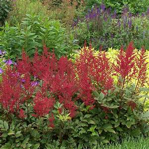 Image Gallery red astilbe