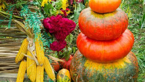 Saulainās rudens ogas ķirbji - piemērotākie audzēšanai ...