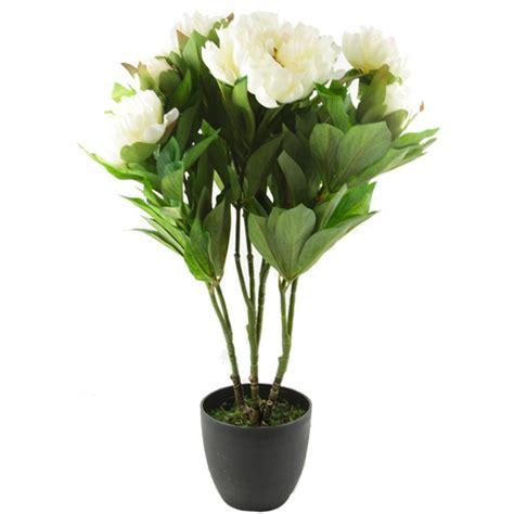 plante fleurs artificielles pivoine ou blanc