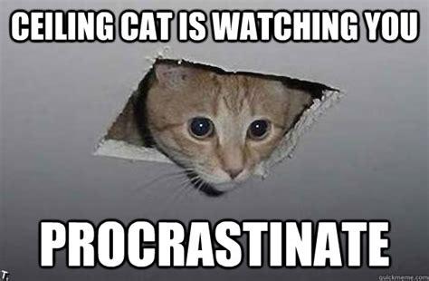 Ceiling Cat Meme Ceiling Cat Is You Procrastinate Ceiling Cat