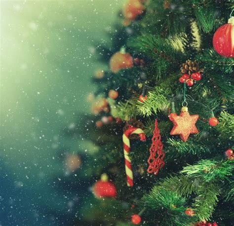 real christmas trees asda will you be putting up a real of tree this year asda living