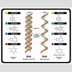 New Studies Reveal Higher Levels Of Genetic Complexity