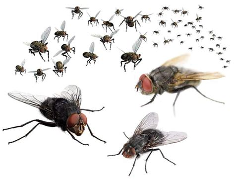 The Health Risks Of The Humble Fly Debugged