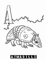 Coloring Printable Pages Armadillo Alphabet Harpsichord Template Animal Library Clipart Popular Doghousemusic sketch template