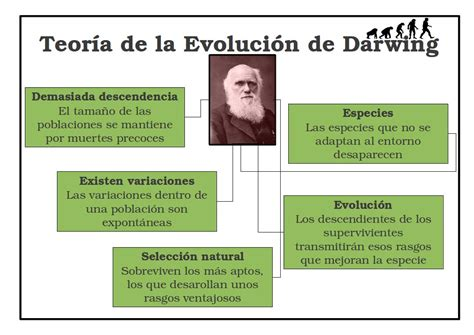 la teor 237 a de la evoluci 243 n de darwin 171 profesor3 cero