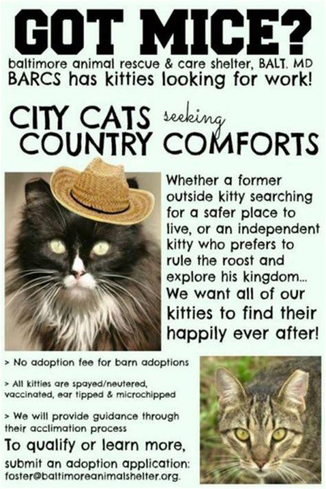 brilliant cat adoption promos aspcapro