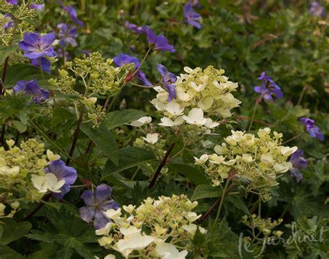 Best Companion Plants For Hydrangea  Les Bauxdeprovence