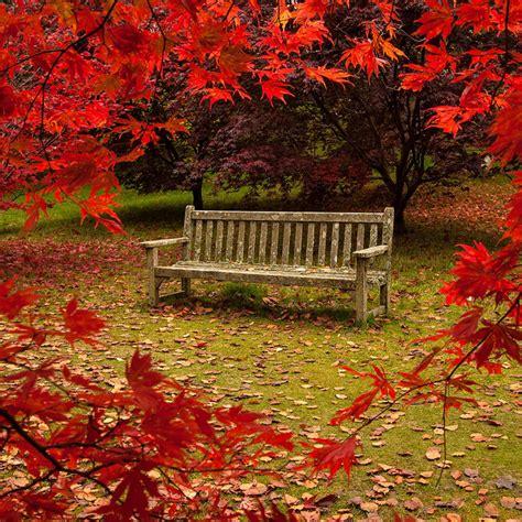 garden autumn when autumn arrives in your garden call a cleaner