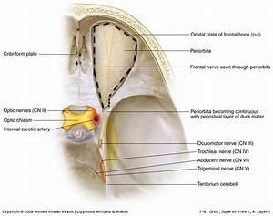 Greater Petrosal Nerve Groove | www.pixshark.com - Images ...