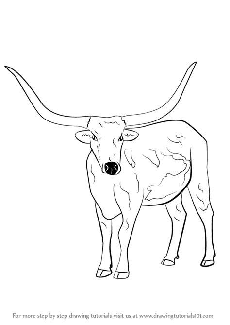 step  step   draw  longhorn cattle