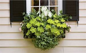 Blumenkästen Bepflanzen Sonnig : balkonk sten bepflanzen schatten sommer heuchera geranien pflanzendeko pinterest garten ~ Orissabook.com Haus und Dekorationen