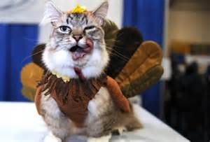thanksgiving cat here are 12 unamused cats and dogs dressed as turkeys