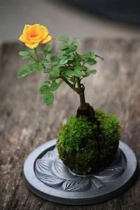 Avocado Pflanze Pflege : die besten 25 avocadobaum ziehen ideen auf pinterest ~ Lizthompson.info Haus und Dekorationen