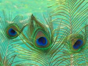 Peacock Feather Wallpapers - Wallpaper Cave