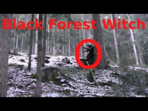 scary black forest witch beware   woods