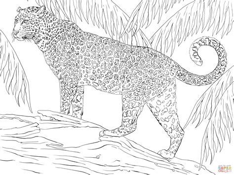 jaguar coloring page  printable coloring pages