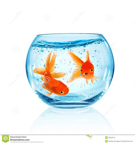 poisson dans l aquarium photographie stock image 33643172