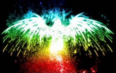 Eagle Colorful Backgrounds Wallpapers Desktop Fractalius