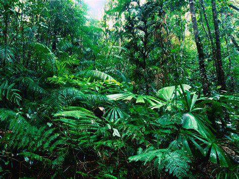Tropical Rainforest Vegetation  7 Tropical Rainforest