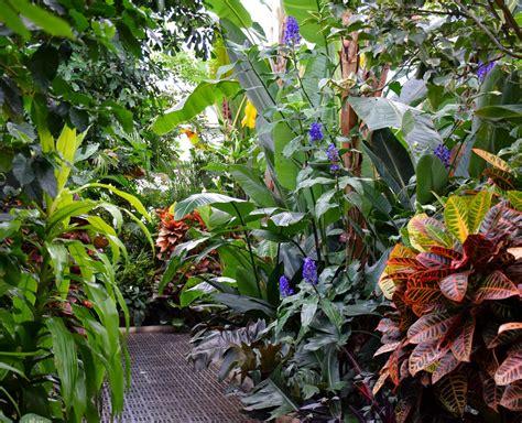 tropical garden plants list tropical house plants list