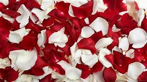 Roses Wallpaper tumblr   wallpaper, wallpaper hd ...
