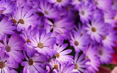 Purple Flowers 4k Wallpapers Desktop